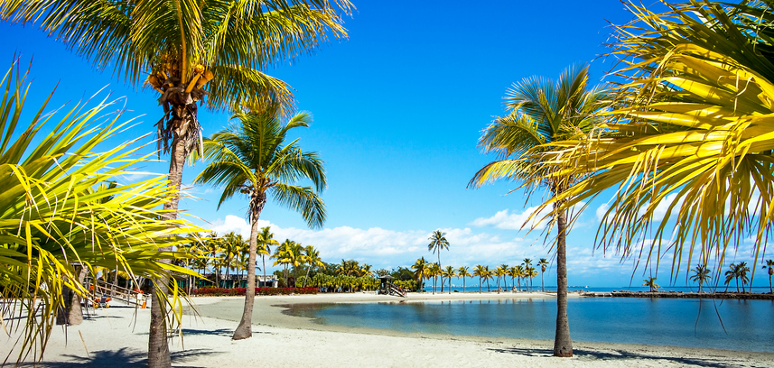 matheson hammock park in miami beach setting with green palm trees